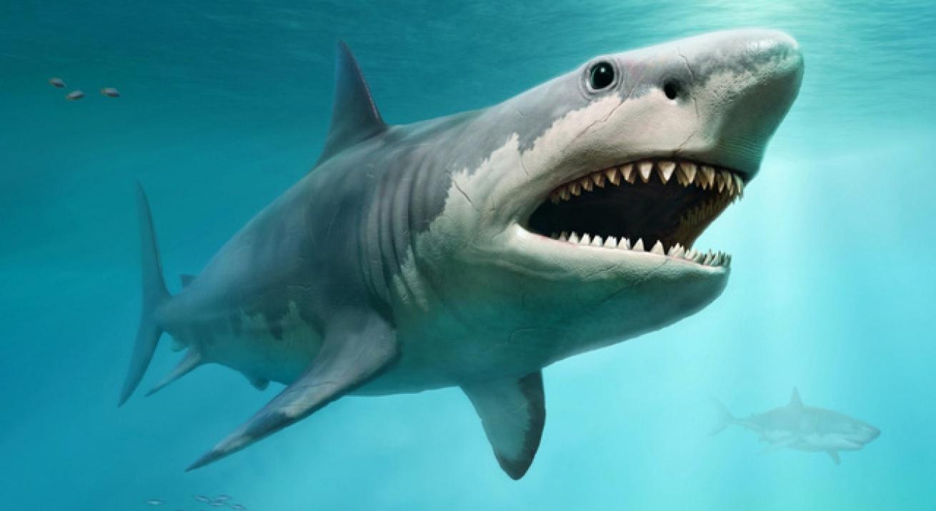 """<i class=""""fa fa-image""""></i>Nghiên cứu đầu tiên chứng minh cá mập cảm nhận từ trường để định hướng"""