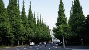 Ô nhiễm tiếng ồn gây ảnh hưởng nghiêm trọng đến sự phát triển và đa dạng thực vật