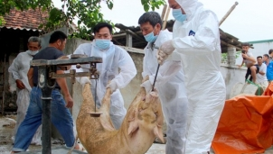 3 ổ dịch tại huyện Yên Thành và Diễn Châu