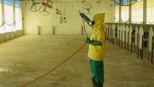 An toàn sinh học trong trại gà giống là gì?