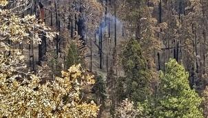 Mỹ: Gần 1 năm sau vụ cháy rừng nhưng cây cổ thụ vẫn âm ỉ bốc khói