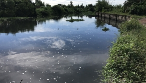 Khu công nghiệp An Nghiệp tại Sóc Trăng gây ô nhiễm trầm trọng
