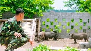 Táp Ná - Giống lợn quý của Việt Nam