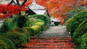 Mùa thu Nhật Bản với vẻ đẹp cùng những lễ hội mang đậm bản sắc