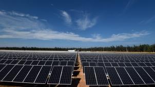 Nỗi lo mất rừng vì những dự án điện mặt trời