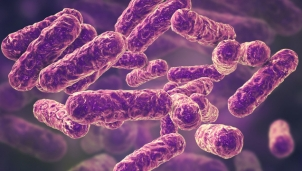 Tái cấu trúc vi khuẩn tiêu diệt mầm bệnh thay vì tấn công tế bào