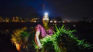 Thanh Hoá: Nắng nóng buộc nông dân xuống đồng trong đêm