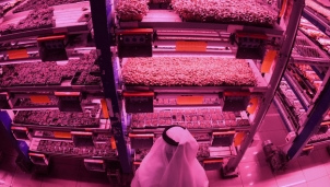 Trồng rau, nuôi bò sữa, cá hồi giữa vùng sa mạc đầy nắng gió - Cách mạng xanh của Dubai
