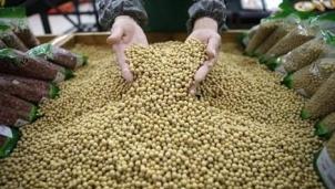 Trung Quốc: Nhu cầu tăng cao đang tái định hình thị trường ngũ cốc toàn cầu