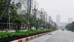 Dự án cây phong lá đỏ thất bại - Hà Nội thay thế bằng cây bàng lá nhỏ dọc tuyến phố Nguyễn Chí Thanh - Trần Duy Hưng