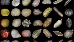Có gì bí ẩn trong những gói hạt giống của Trung Quốc?