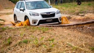 """Cục bảo vệ người tiêu dùng lên tiếng về việc xe Subaru """"bị tố"""" dính lỗi kỹ thuật"""