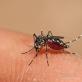 Những dấu hiệu cho thấy bạn sắp khỏi bệnh sốt xuất huyết