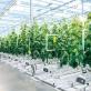 Công nghệ cao tạo động lực cho ngành nông nghiệp Việt Nam
