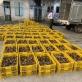 Bắt 40.000 con gia cầm nhập lậu từ Trung Quốc vào Việt Nam đang trên đường tiêu thụ