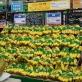 Chuối Việt lần đầu bán ở đại siêu thị Hàn Quốc, 80.000 đồng/kg