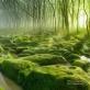 Những khu rừng kỳ bí nhất thế giới