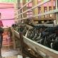Quảng Trị: Mô hình chăn nuôi dê thâm canh đạt hiệu quả cao