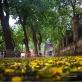 Mùa thu lãng mạn sau cơn mưa trên phố Phan Đình Phùng