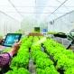 Nông nghiệp thông minh và chuyển đổi số nông nghiệp