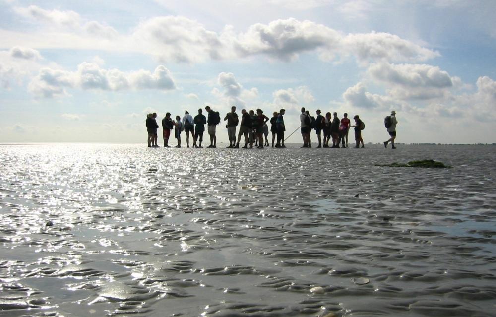 Những thú vui mà biển Wadden mang đến cho du khách mà không phải bãi biển nào trên thế giới có thể mang đến được