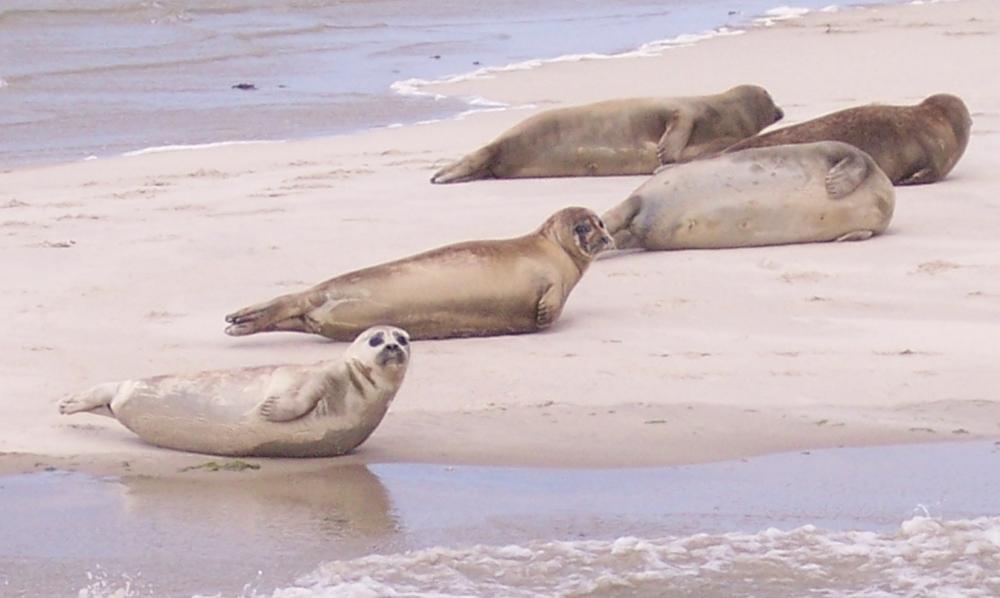 Biển Wadden được xem là nơi lưu trữ đang dạng sinh học thế giới mà UNESCO đưa vào danh sách di sản thế giới cần được bảo vệ