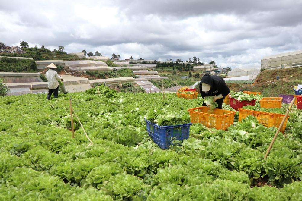 Các mặt hàng nông sản được kết nối trực tiếp từ đồng ruộng đến tay người tiêu dùng