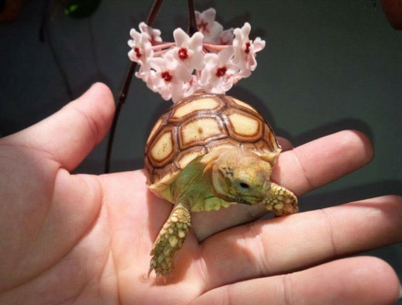 Với các loài rùa hoang dã có thể mang theo trên mình các loại virus có thể gây nguy hại đến sức khoẻ của con người