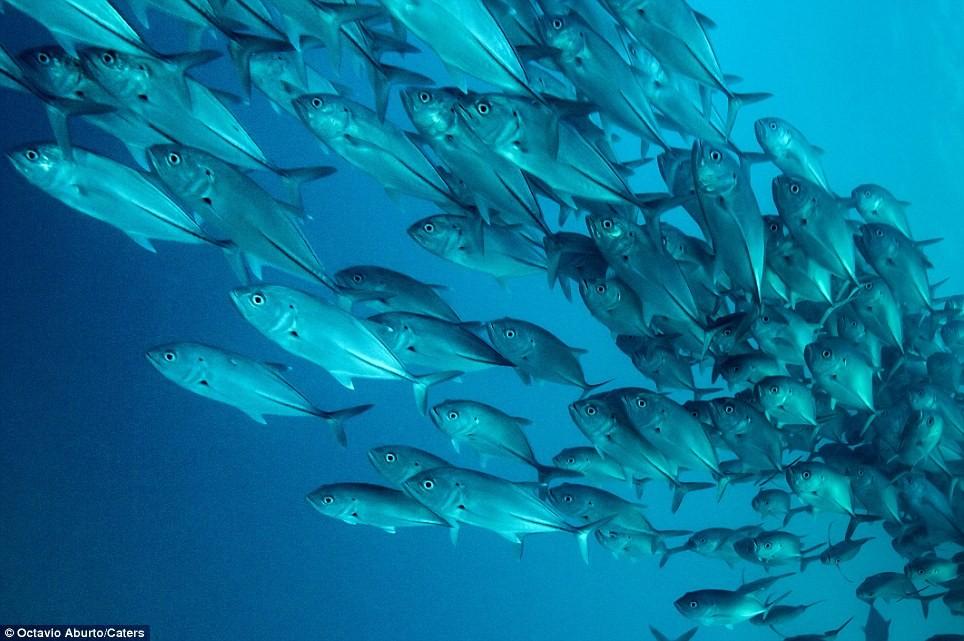 Môi trường biển đang bị thu hẹp với các loài cá